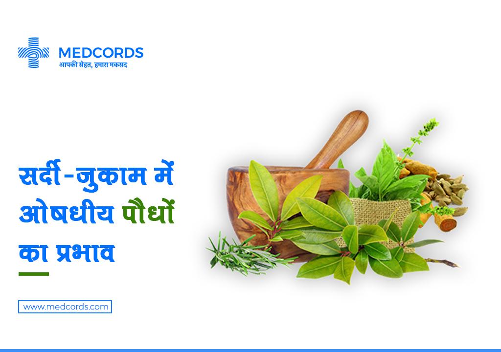 MEDICINAL PLANTS CURE COLD | सर्दी-जुकाम में सहायक 5 ओषधीय पौधे