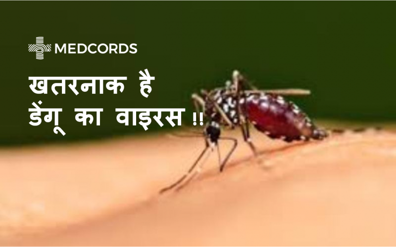 डेंगू-mosquito-sucking-blood-from-body