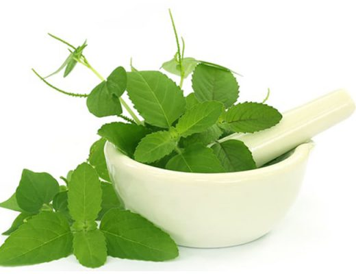 basil leaves benefits