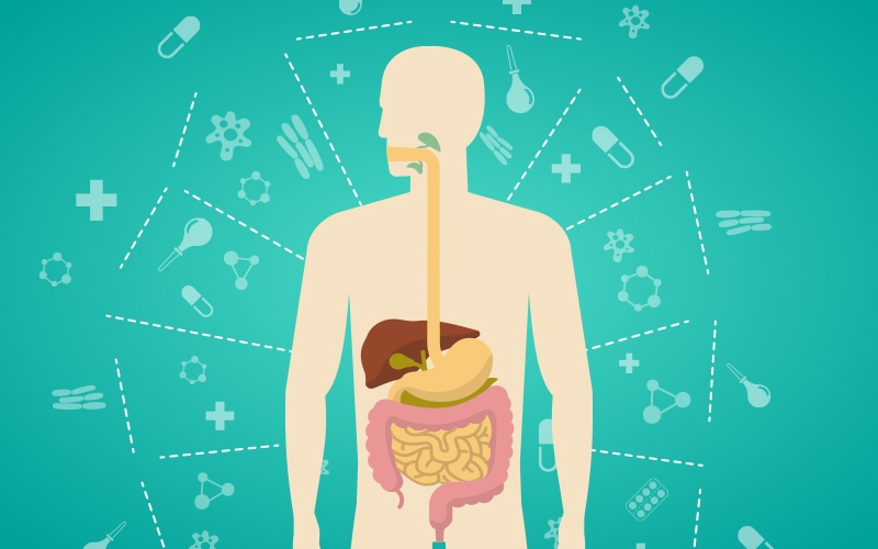 proper functioning of digestive system