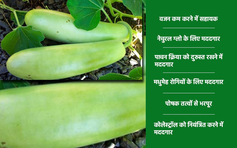 gourd image
