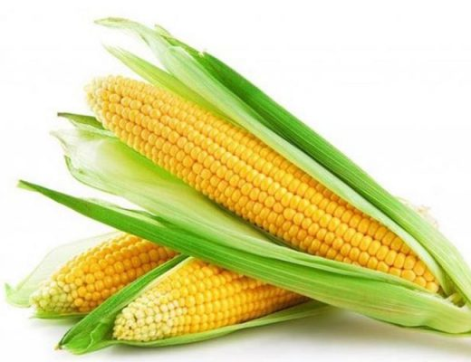 Pros and Cons of Corn