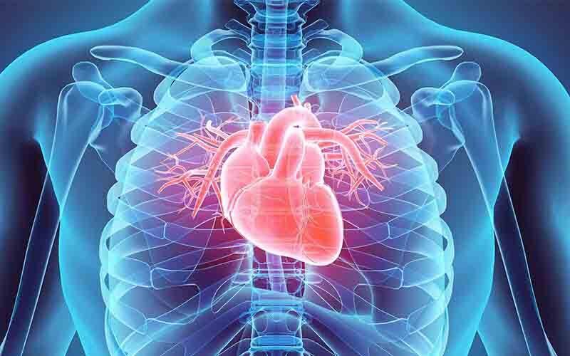 Cardiovascular : कार्डियोवस्कुलर के शिकार बन रहे भारत के युवा, जानिए क्या है कार्डियोवस्कुलर