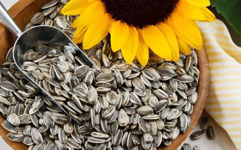 कैंसर जैसी बिमारियों जैसी चीज़ों से बचाएँ सूरजमुखी के बीज | Daily Health Tip | 18 July 2020 | AAYU App