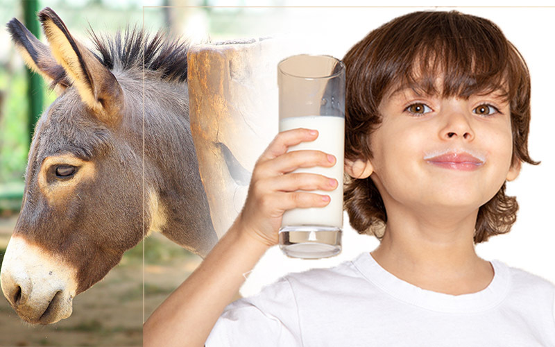 Benefits of Donkey Milk in Hindi