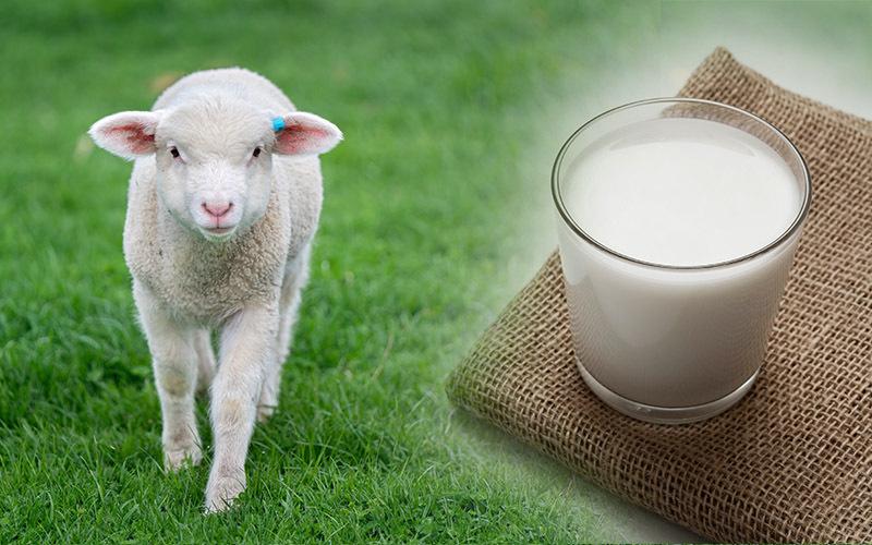 ship milk benefits