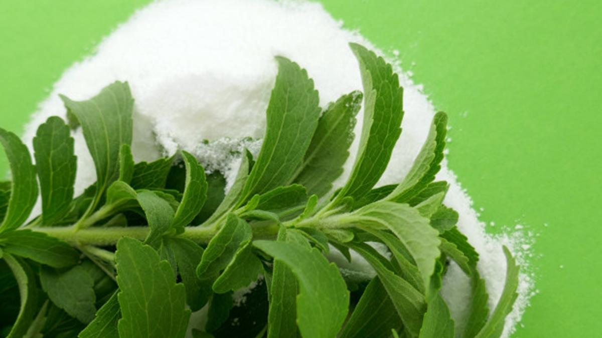 स्टीविया के फायदे और नुकसान Stevia Benefits and Side Effects