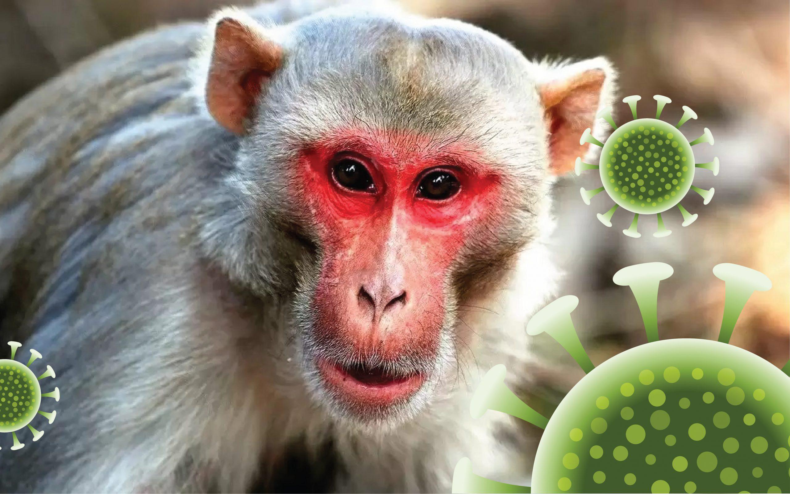 Monkey-B virus: कोरोना के बाद मंकी-बी वायरस का खतरा, जानिए क्या हैं इसके लक्षण?
